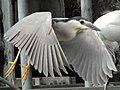 Flying (9195691795).jpg