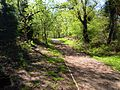 Footpath, Pretty Corner Woods, 12 May 2012.JPG