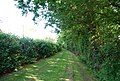 Footpath along side an orchard near Matfield - geograph.org.uk - 1361040.jpg