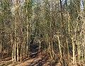 Footpath in woods, near Southam - geograph.org.uk - 1103343.jpg