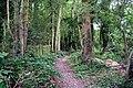 Footpath near Lingfield, Surrey - geograph.org.uk - 883767.jpg