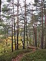 Forêt autour de la cascade du Nideck, Alsace.jpg