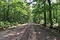 Forêt domaniale de Bois-d'Arcy 26.jpg