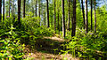 Forest Light (7442670298).jpg
