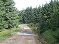 Forest Track - geograph.org.uk - 528249.jpg
