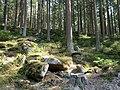 Forest near the Große Bode 17.jpg