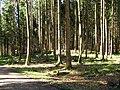 Forst Unterbrunn GO-1.jpg