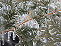 Freezing Rain in Canada 2013 93.JPG