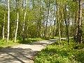 Friedrichshagen - Waldweg (Woodland Path) - geo.hlipp.de - 36041.jpg