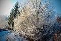 Frozen Nature (54051938).jpeg