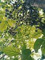 Fruits 20170614130217.jpg