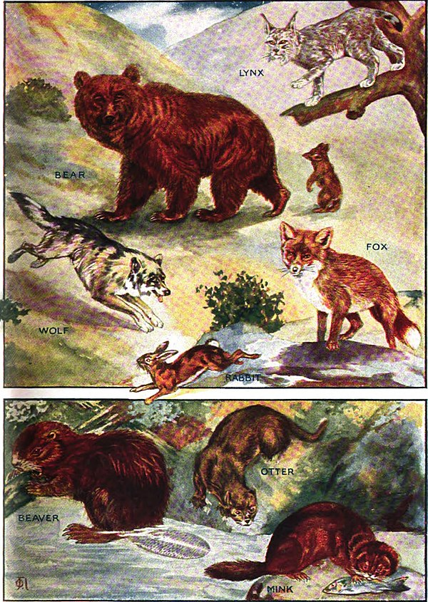 Fur-Bearing Animals (right).jpg