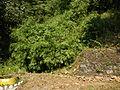 FvfBurgosLaUnion0095 23.JPG