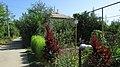 Gardenbed. August 2014. - Грядка. Август 2014. - panoramio.jpg