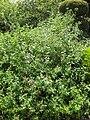 Gardenology-IMG 7871 hunt10aug.jpg