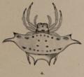Gasteracantha mollusca (now G. westringi) by L. Koch 1871.png