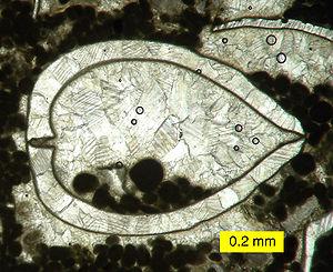 Folk classification - Image: Geopetal Carboniferous NV