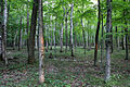 Gfp-wisconsin-potawatomi-state-park-forest.jpg