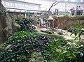 Giant Panda Conservation Centre in Zoo Negara Malaysia 2021 (1).jpg