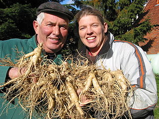 By FloraFarm GmbH Katharina Lohrie (www.florafarm.de / Bild selbst erstellt) [GFDL (http://www.gnu.org/copyleft/fdl.html) or CC BY 3.0 (http://creativecommons.org/licenses/by/3.0)], via Wikimedia Commons