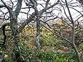 Gorse and Undergrowth, Laurel's Mountain, Llanteg - geograph.org.uk - 1051255.jpg