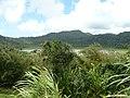 Grand Etang Forest Reserve - panoramio - georama.jpg