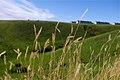 Grass (2557952578).jpg
