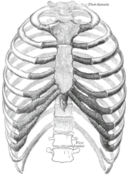 The human rib cage. (Source: Gray's Anatomy of the Human Body, 20th ed. 1918.)