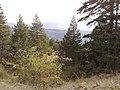 Greece - Grevena - Filippaioi - trees 02.jpg