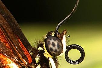 Green Hills Butterfly Farm, Belize.jpg