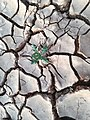 Green plant in a dry land.jpg