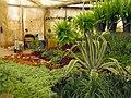Greenhouses in mahallat 43.jpg