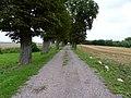 Grylewo - droga na cmentarz parafialny - panoramio.jpg