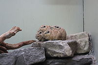 Four rodents clustered together on a rock.