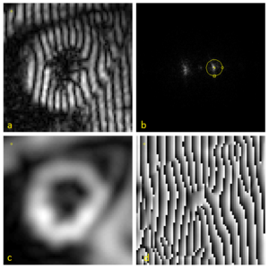 HARP (algorithm) - Demonstration of the HARP processing of a tagged cardiac MRI slice. (a) An MR image with vertical SPAMM tags. (b) shows the magnitude of its Fourier transform. By extracting the spectral peak inside the circle, a complex image is produced with a magnitude (c) and a phase (d).