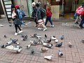 HK 中環 Central 德輔道中 39 Des Voeux Road Central 德忌利士街 Douglas Street freedom pigeons December 2019 SS2 03.jpg