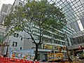 HK Sheung Wan 前 荷李活道已婚警察宿舍 former Hollywood Road Police R & F Married Quarters courtyard Aberdeen Street Dec-2013 Banyan tree 01.JPG