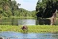 Habitat for Fish in the Sacramento River (9027317679).jpg