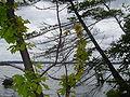 Hamlin Lake1.jpg