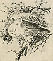 Handbook of birds of the western United States, including the great plains, great basin, Pacific slope, and lower Rio Grande valley (1904) (14755093862).jpg