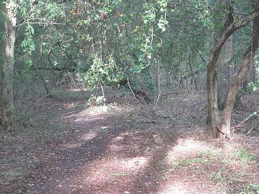 Hardwick Wood 3
