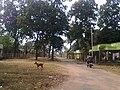 Harshvardhan Road, Durgapur, West Bengal, India on 13.11.11 - panoramio.jpg