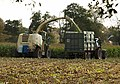 Harvesting maize, Longaller (4) - geograph.org.uk - 1001019.jpg