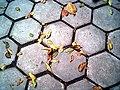 Hexagon - by Claudine Rodriquez.jpg