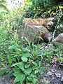 Hieracium vulgatum plant (03).jpg