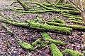 Hollandse Hout, natuurgebied in Flevoland. 07-02-2020. (actm.) 52.jpg