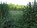 Hop garden - geograph.org.uk - 329744.jpg