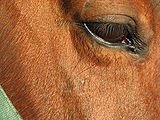 Horse-eye-closeup-0b.jpg