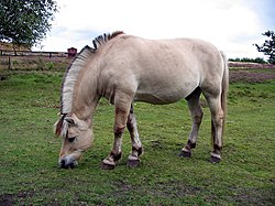Horse hjerl hede 2004 ubt.jpeg
