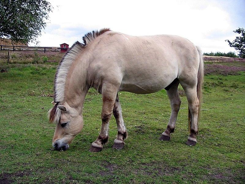Horse hjerl hede 2004 ubt